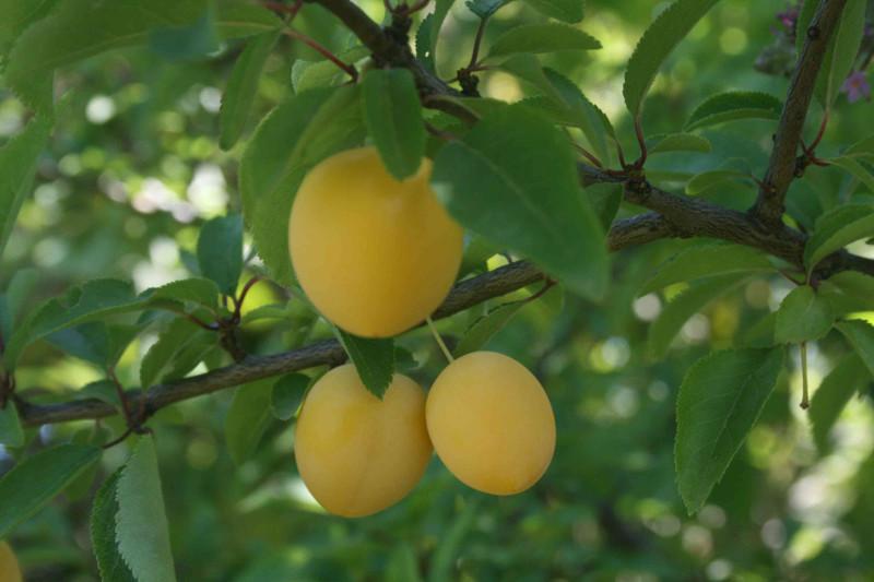 frucht spiele